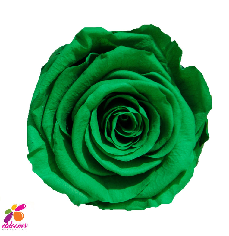 Preserved Roses Green - EbloomsDirect