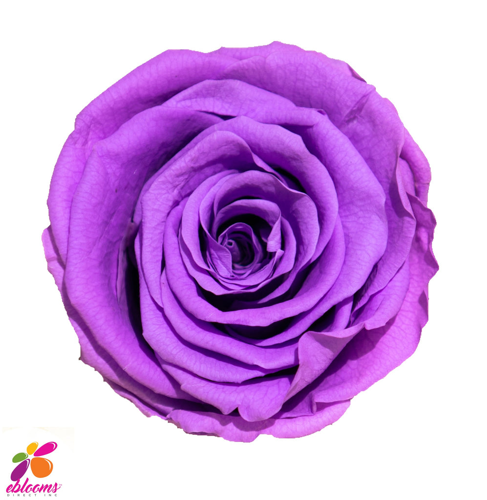 Preserved Flower Purple - wholesale rose