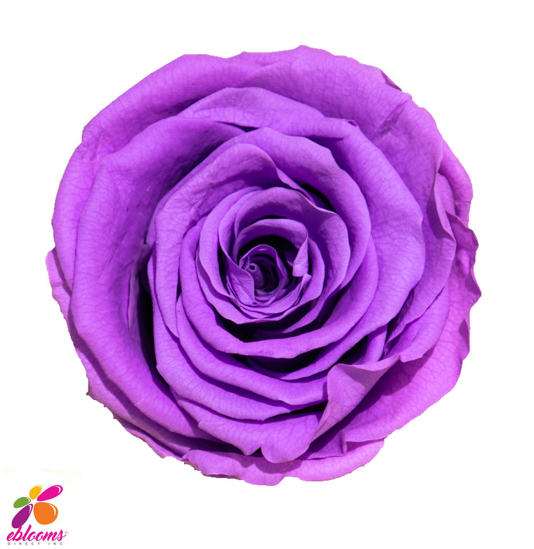 Preserved Roses Purple - EbloomsDirect