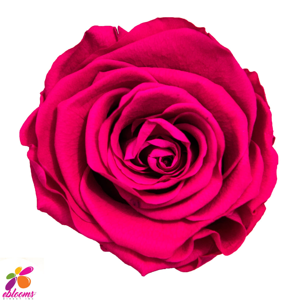 Preserved Flower Hot pink - wholesale rose