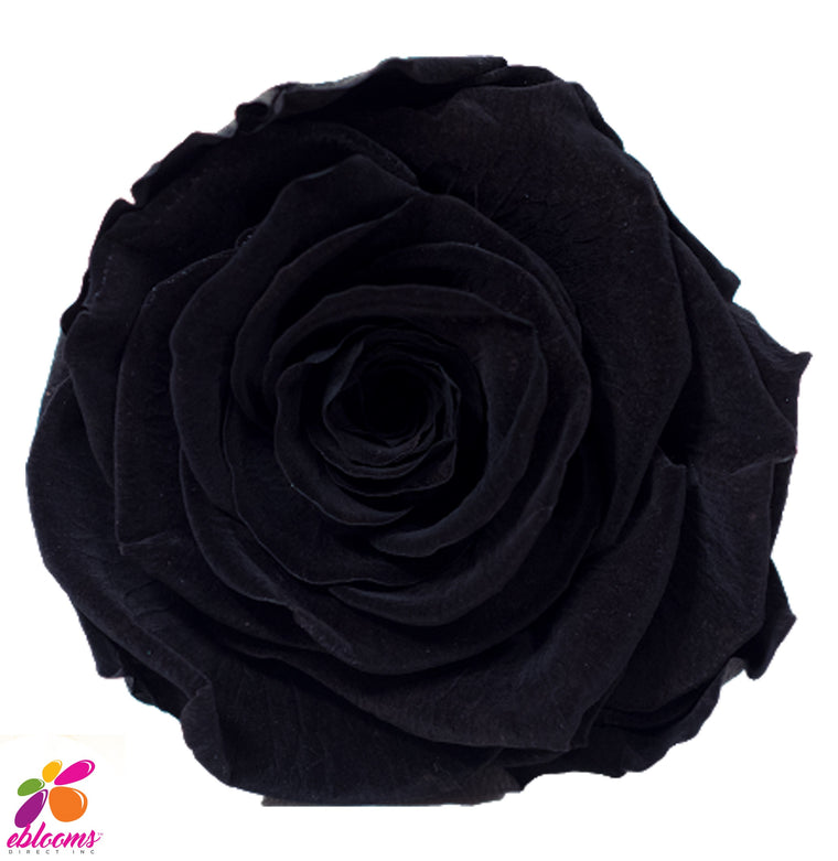 Preserved Roses Black - EbloomsDirect