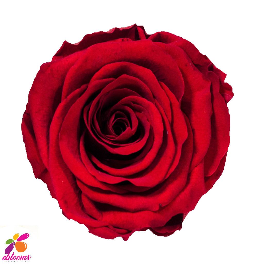 Preserved Flower Red roses - wholesale rose