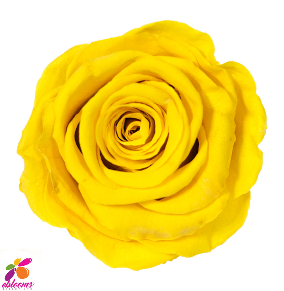 Preserved Flower yellow roses - wholesale rose