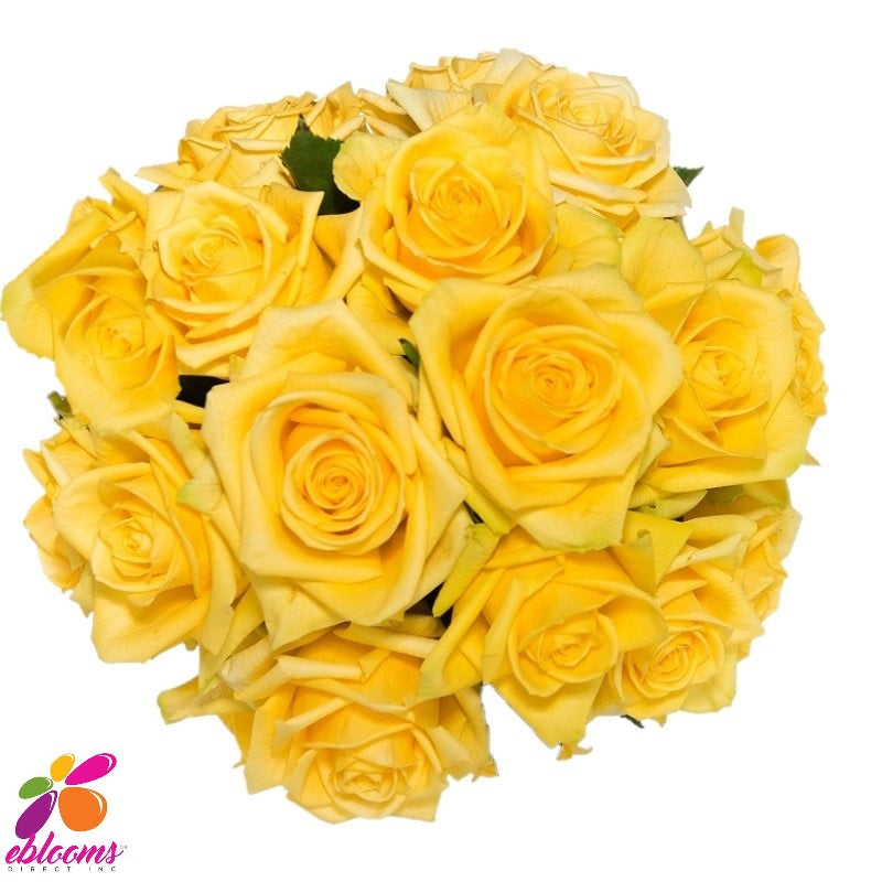 Stardust Rose Bunch - EbloomsDirect