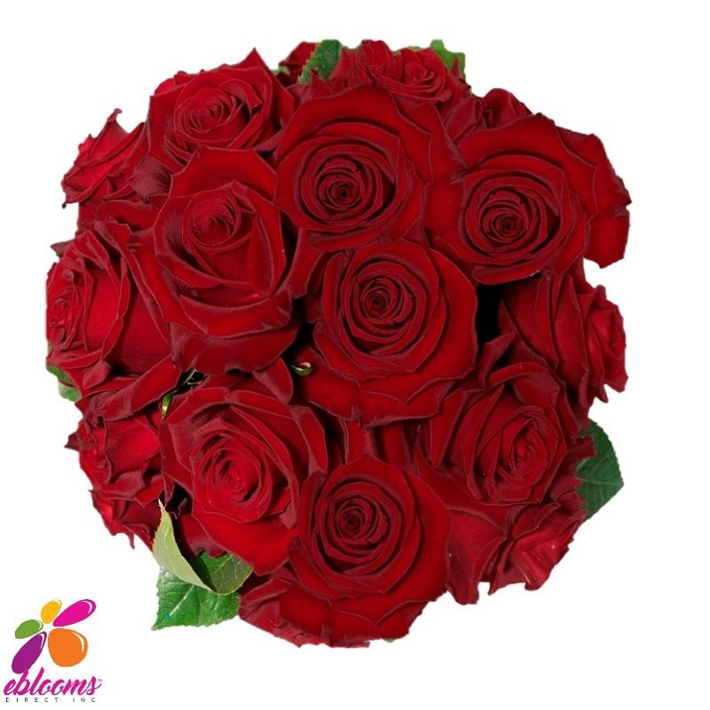 Tinto Red Rose variety - EbloomsDirect