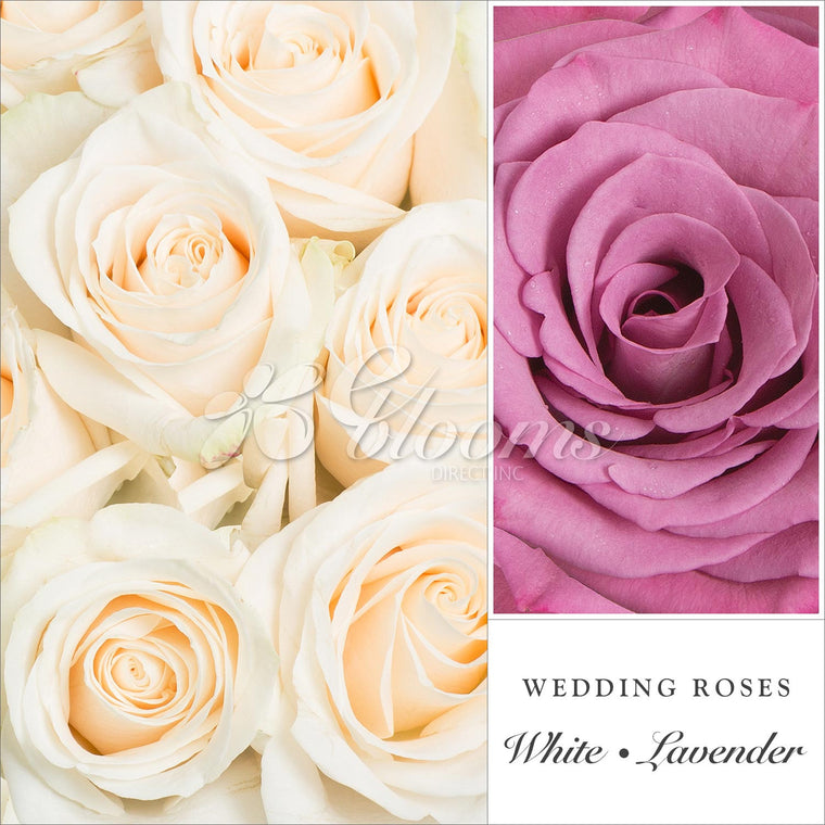 Roses Lavender and White 50cm - Ebloomsdirect - Farm Fresh Weddings & Events 2019-2020✔