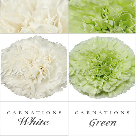 Carnations White and Green - EbloomsDirect