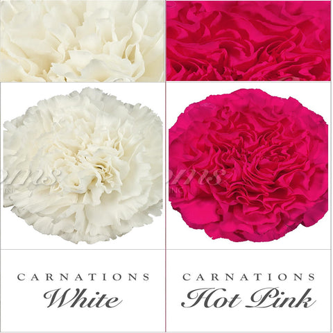 Carnations White and Hot Pink - EbloomsDirect