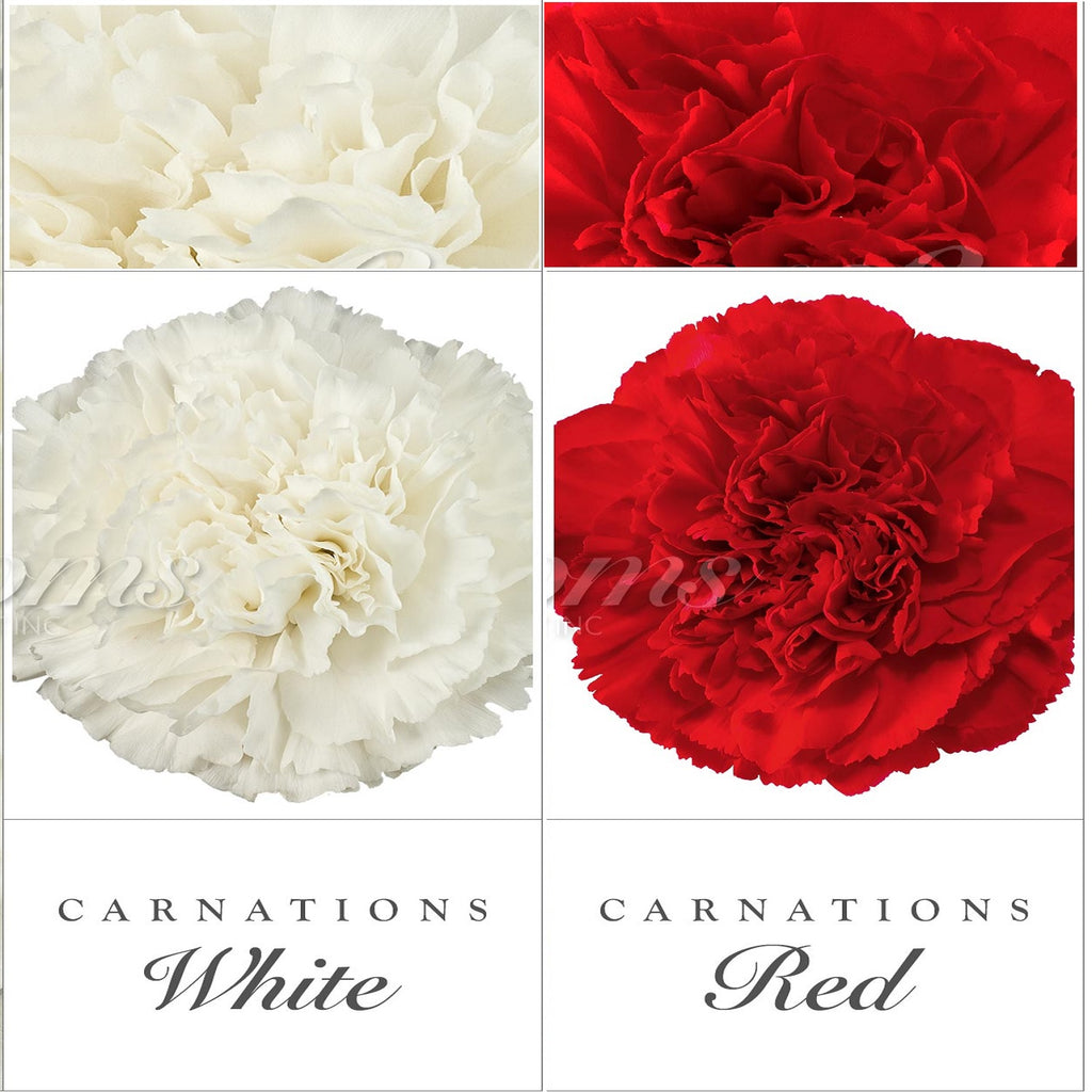 Carnations White and Red - EbloomsDirect