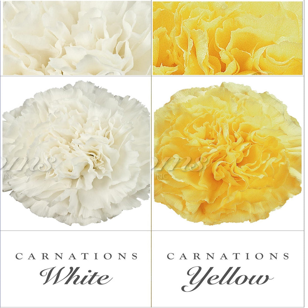 Carnations White and Yellow - EbloomsDirect