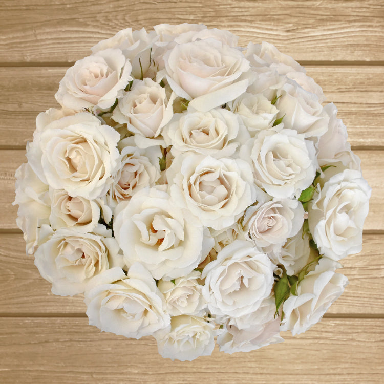 Spray Roses White 40cm - Pack 120 Stems - EbloomsDirect