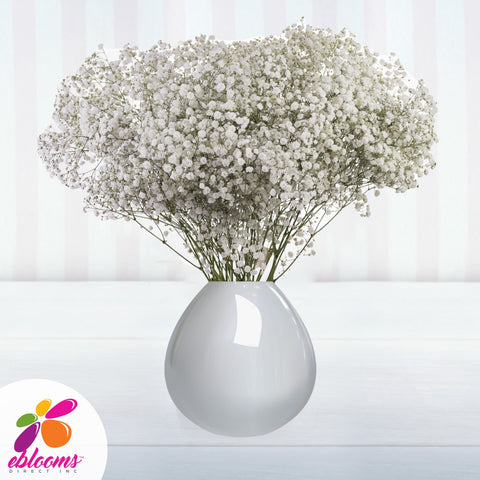 Xlence Baby's Breath