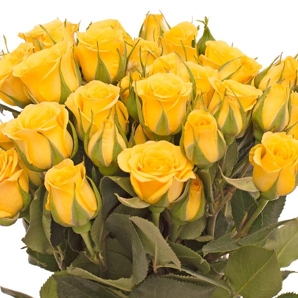 Spray Roses Yellow 40cm - Pack 120 Stems - EbloomsDirect