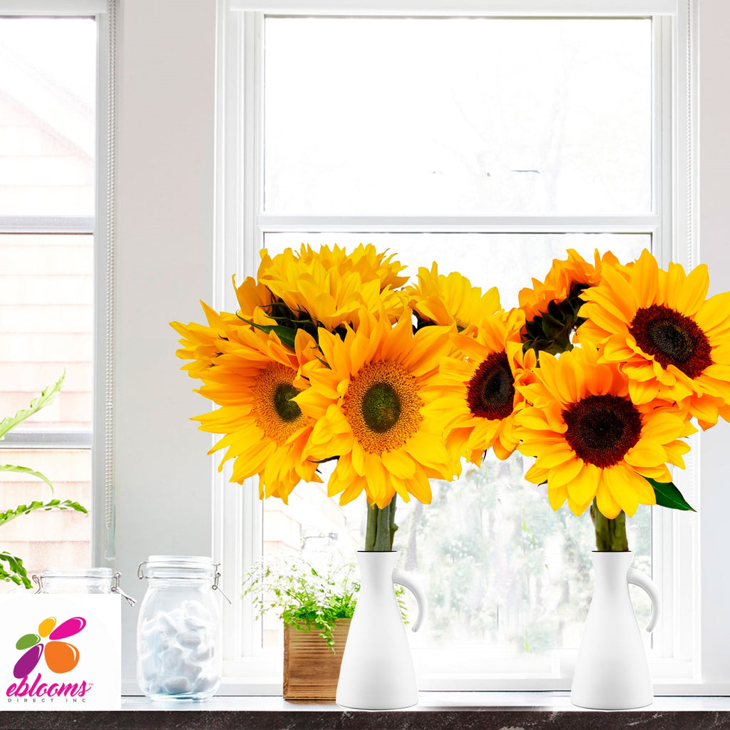 Sunflower Small Mix Green and brown center - EbloomsDirect