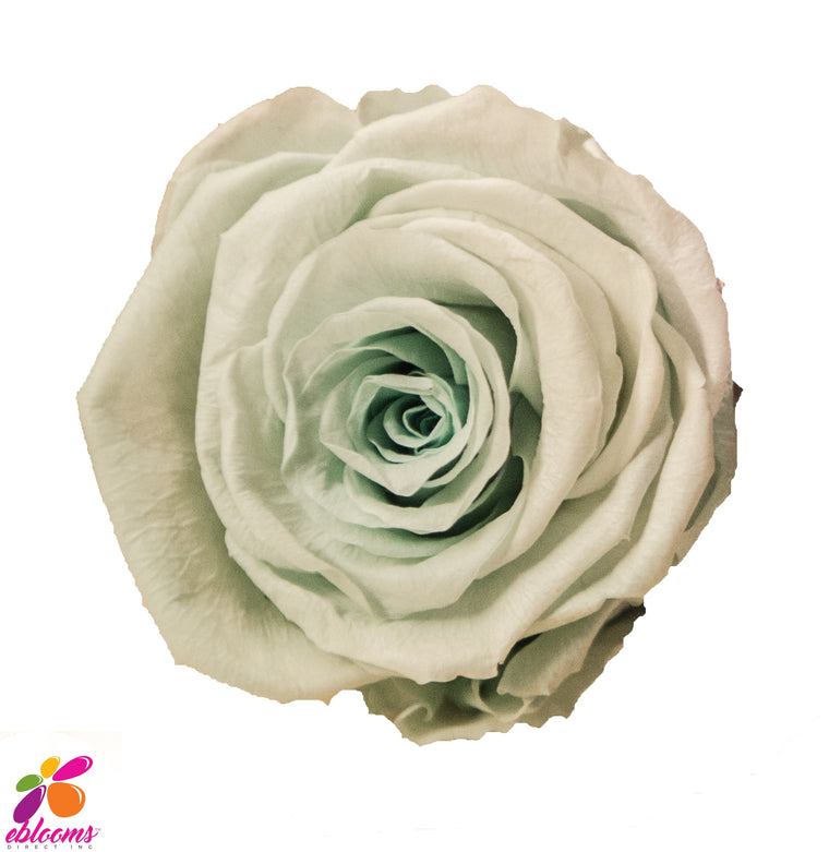 Preserved Roses Mint - EbloomsDirect