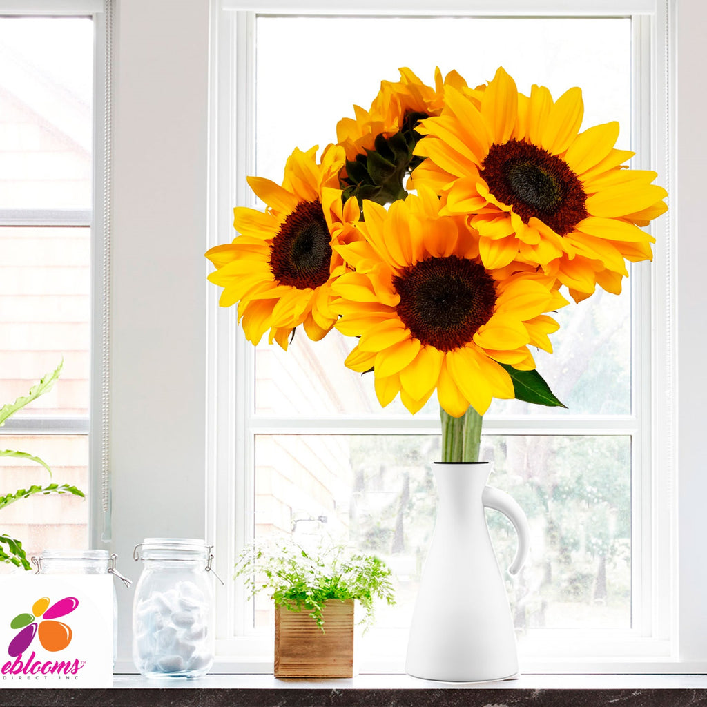 Sunflower Select Brown center - EbloomsDirect