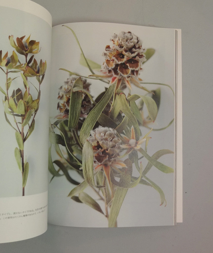 The Encyclopaedia of Dried Flowers}