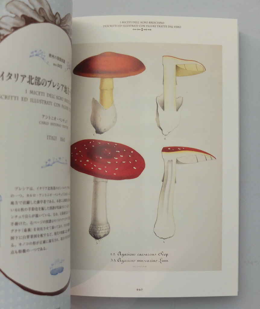 Mushroom Botanical Art by Ouvrage Collectif