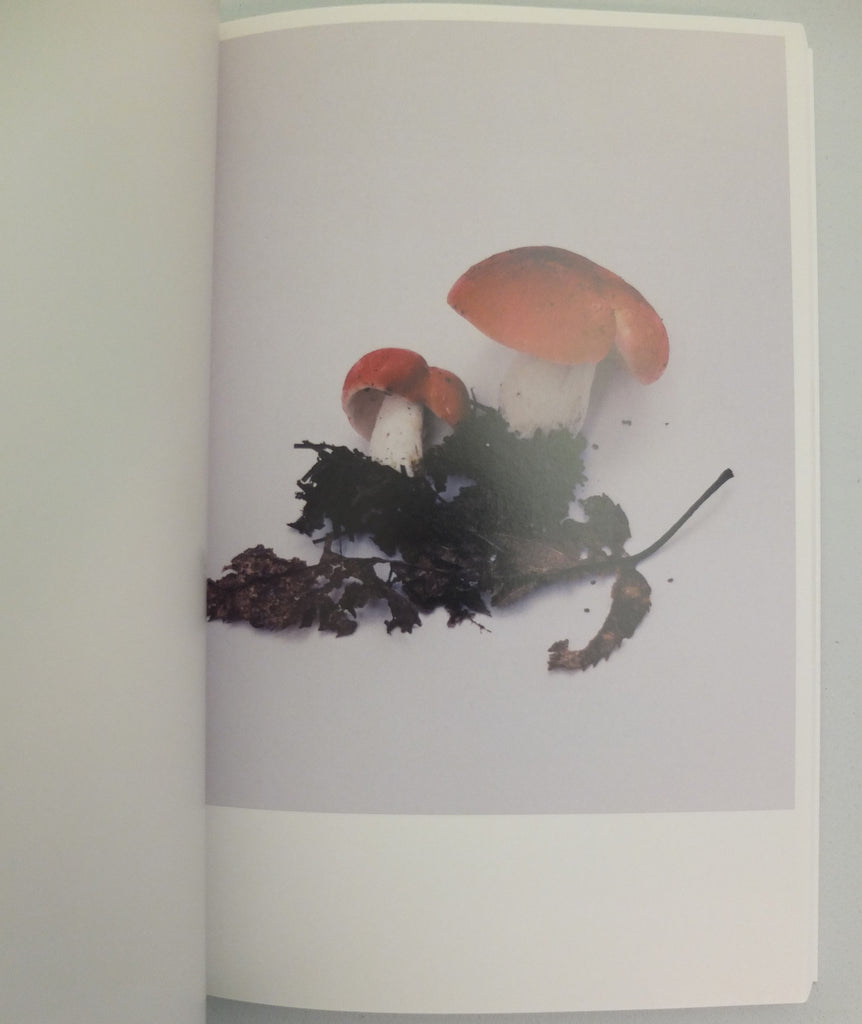 Mushrooms from the Forest by Takashi Homma (OOP)