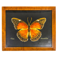 Large Orange Butterfly