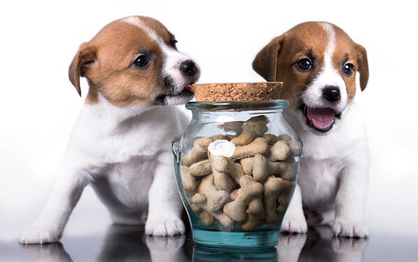 Puppies with dog biscuits in a sealed container