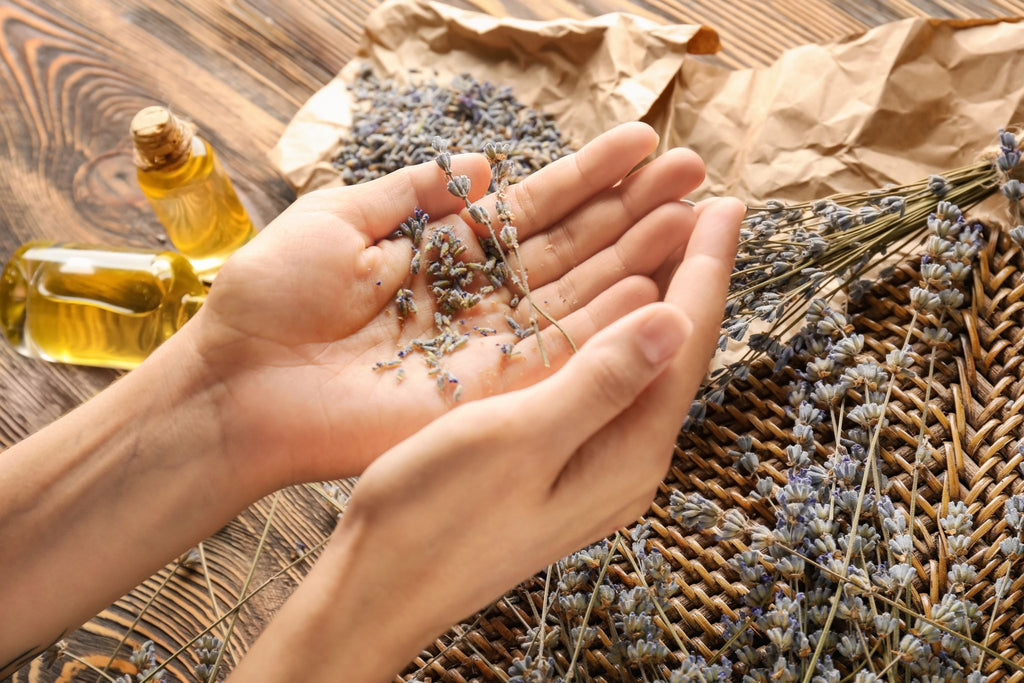 hands holding sprigs of lavender with essential oils in the background