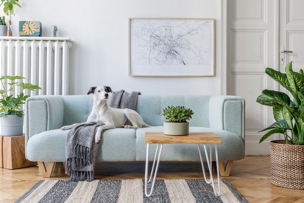 a dog relaxing on a sofa with a woolen throw underneath him