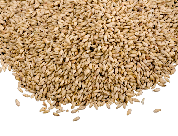 SWAEN BELGIAN 2-ROW PALE MALT 1 OZ