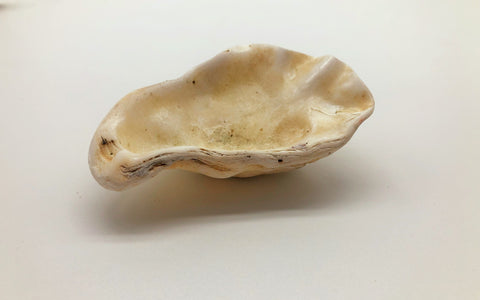 Ethically sourced natural Oyster Shell