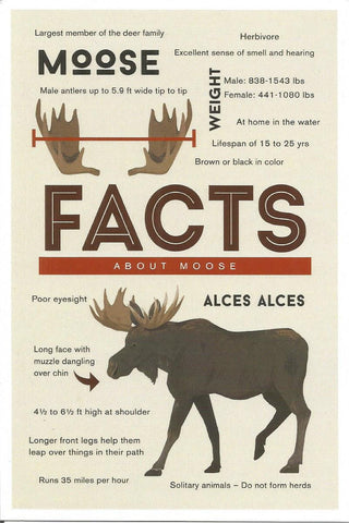 Facts About Moose Postcard