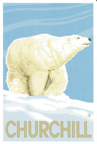 Churchill - Polar Bear Postcard