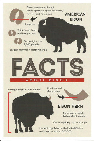 Facts About Bison Postcard