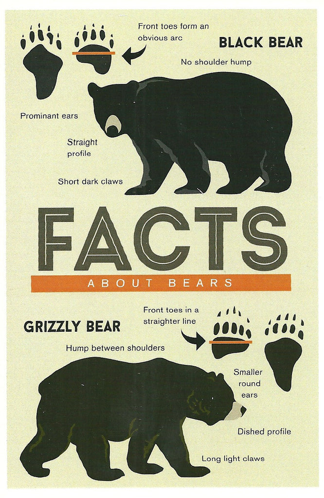 Facts About Bears Postcard