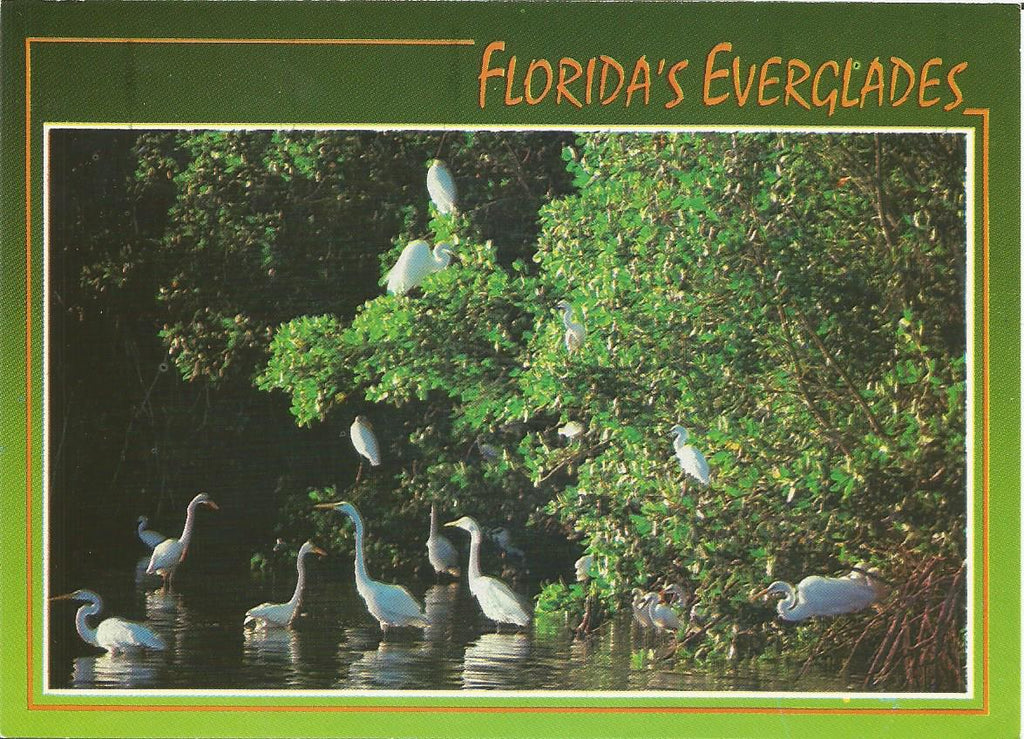 USA - Florida - Everglades - Great Egret Postcard