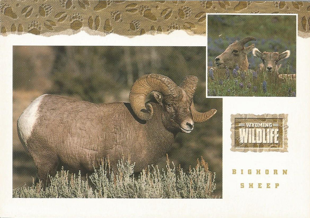 USA - Wyoming - Wildlife Postcard Set