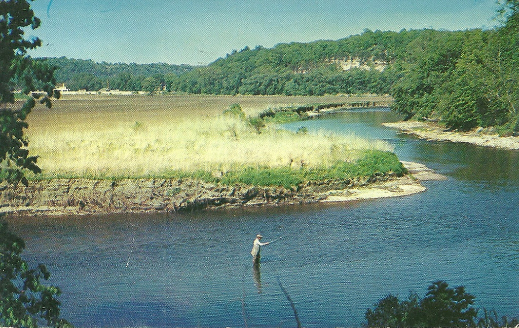 Field & Stream Postcard