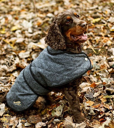 John Partridge Dog Coat