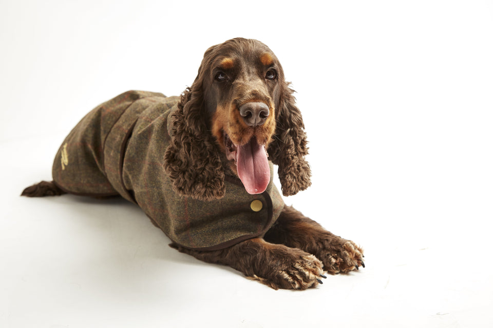 Dog Coat - Waxed Tweed