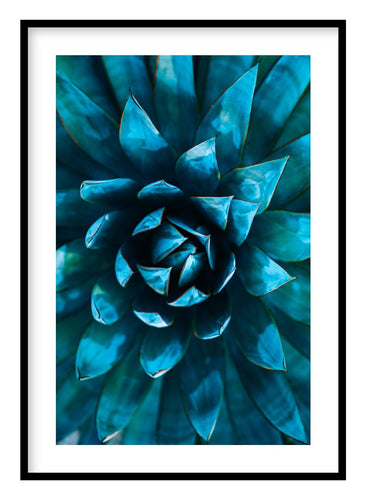 Blue Agave Poster - Hidden Prints