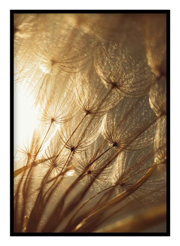 Golden Dandelions Poster Hidden Prints