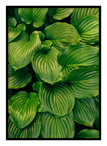 Green Leaves Poster Hidden Prints