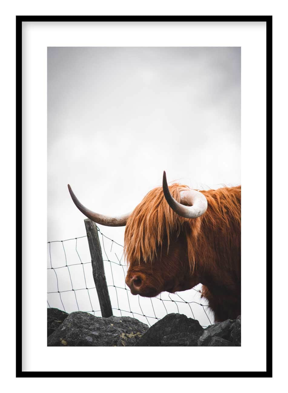 Highland Cow Poster Hidden Prints