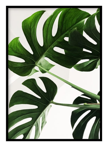 Monstera Poster - Hidden Prints