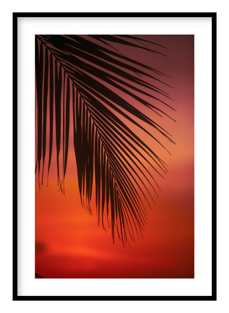 Palm Leaf Poster Hidden Prints