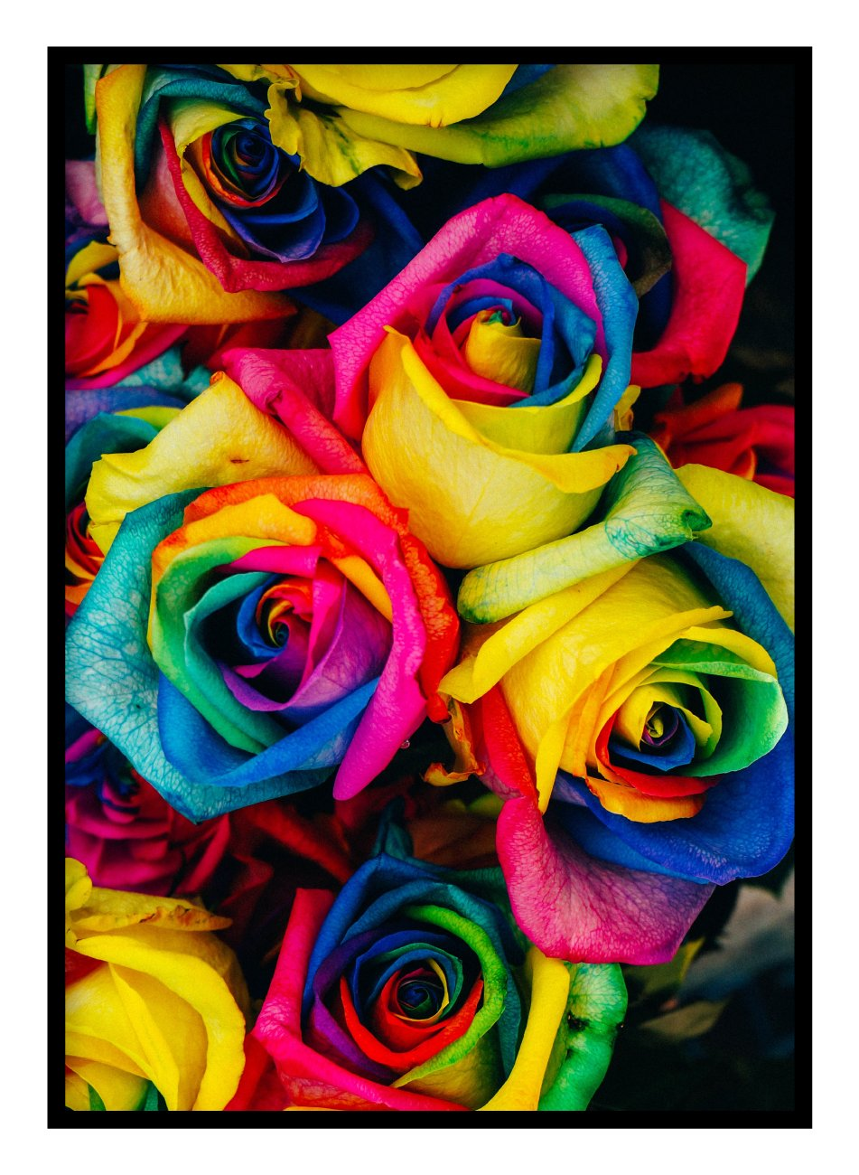 Rainbow Roses Poster Hidden Prints
