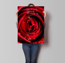 Load image into Gallery viewer, Rose Water Droplets Poster