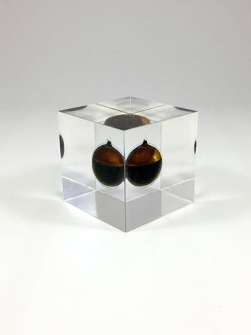 Oil Cube Deal Toy