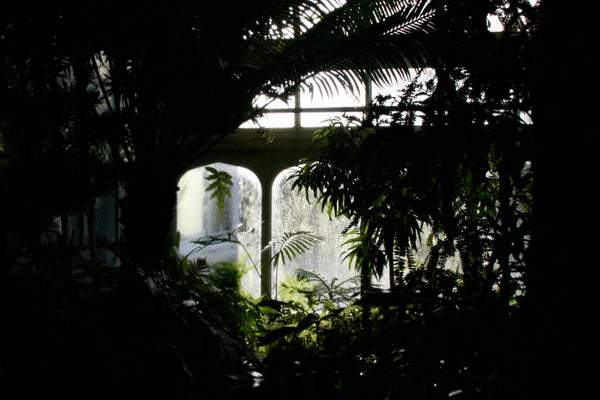 Smith College Botanical Garden - silhouette
