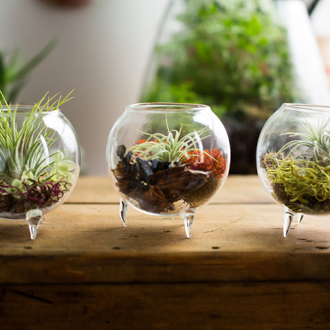 Terrarium Gift for Her
