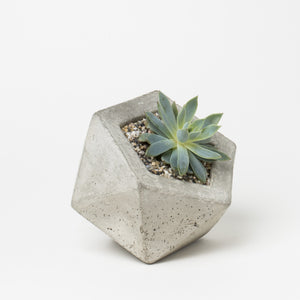 Geodesic Concrete Planter - KESTREL